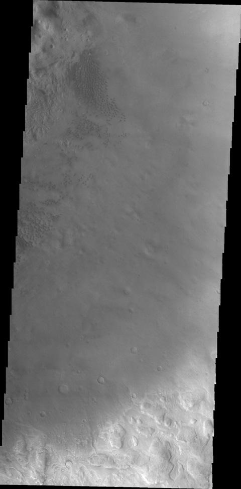 This image, taken by NASA's 2001 Mars Odyssey spacecraft, shows small individual dunes on the floor of Moreux Crater.