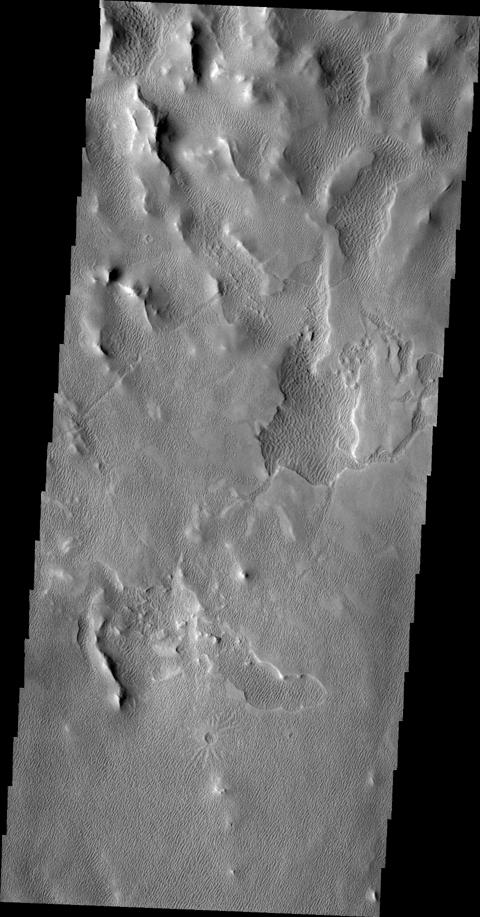 This image of an area south of Olympus Mons shows a region where the wind has been an active agent in modifying the surface. Small linear dunes cover the surface in this image taken by NASA's 2001 Mars Odyssey spacecraft.