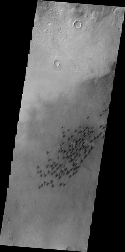 This image, taken by NASA's 2001 Mars Odyssey spacecraft, shows part of the floor of Arkhangelsky Crater. Small individual dunes are found in this region of the crater floor.