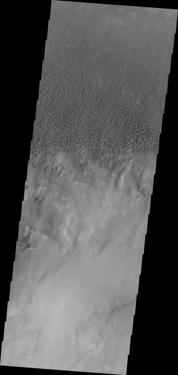 Dunes forms top this sand sheet in the plains of Aonia Terra in this image captured by NASA's Mars Odyssey.