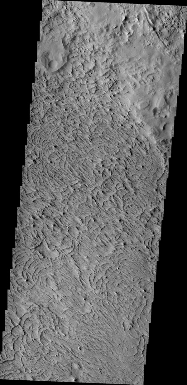 The unusual surface texture seen in the image from NASA's 2001 Mars Odyssey spacecraft reflects the resistance of the surface rocks to erosion by the wind. This image shows part of the northern end of Gordii Dorsum.