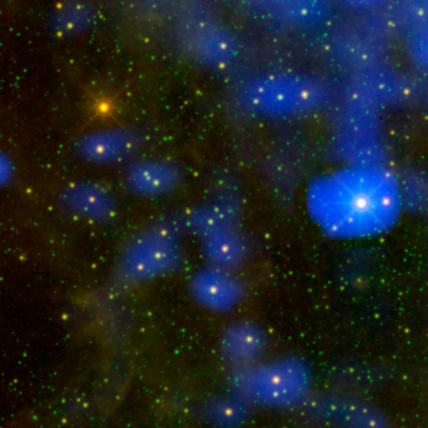 It's a dust bunny of cosmic proportions. Astronomers used images from NASA's WISE to locate an aging star shedding loads of dust (orange dot at upper left).
