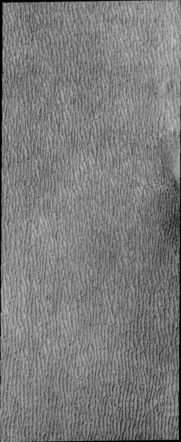 This image from by NASA's 2001 Mars Odyssey spacecraft shows a small portion of the vast region of dunes around the north polar.