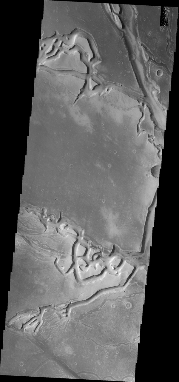 The complex channels in this image from NASA's 2001 Mars Odyssey spacecraft are part of Granicus Valles, located on the western margin of the Elysium volcanic region.