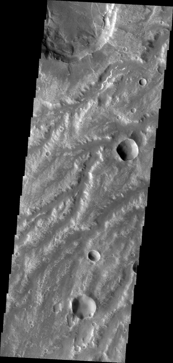 The network of channels in this image captured by NASA's 2001 Mars Odyssey spacecraft are part of Arda Valles.