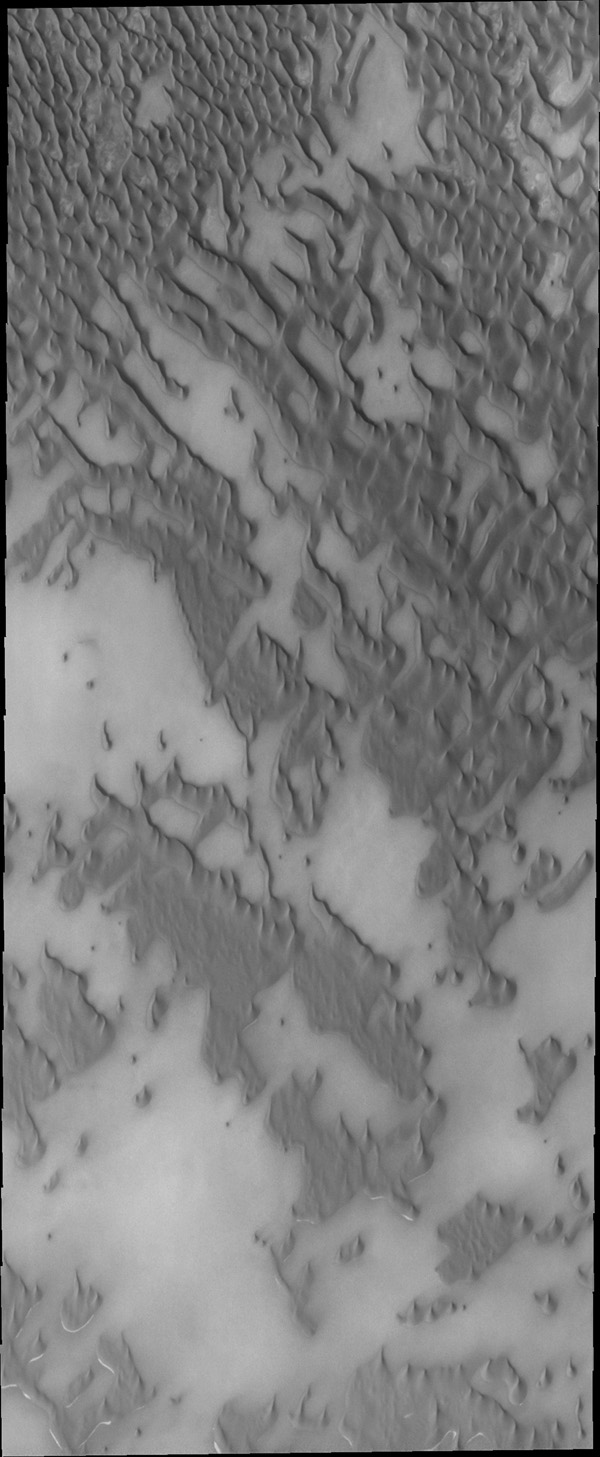 This image captured by NASA's 2001 Mars Odyssey spacecraft shows part of Olympia Undae where the surface beneath the dunes is visible.