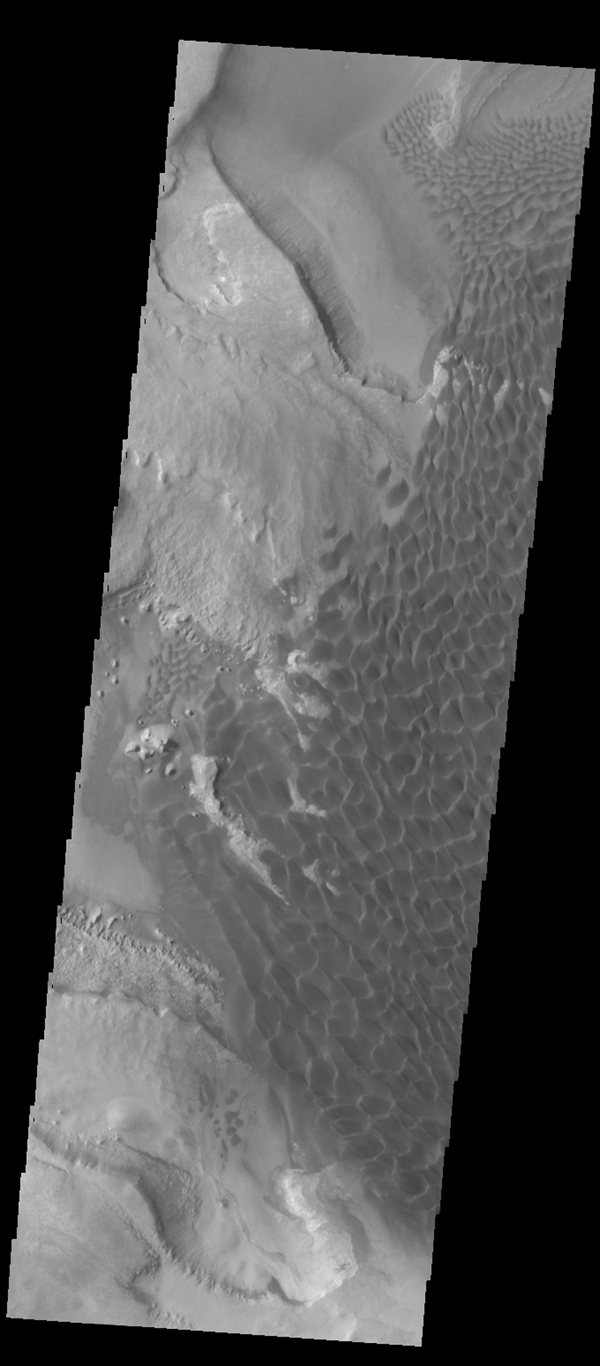 This VIS image captured by NASA's 2001 Mars Odyssey spacecraft, compared to yesterday's IR image, shows the dunes darker than their surroundings due to cooler temperature.