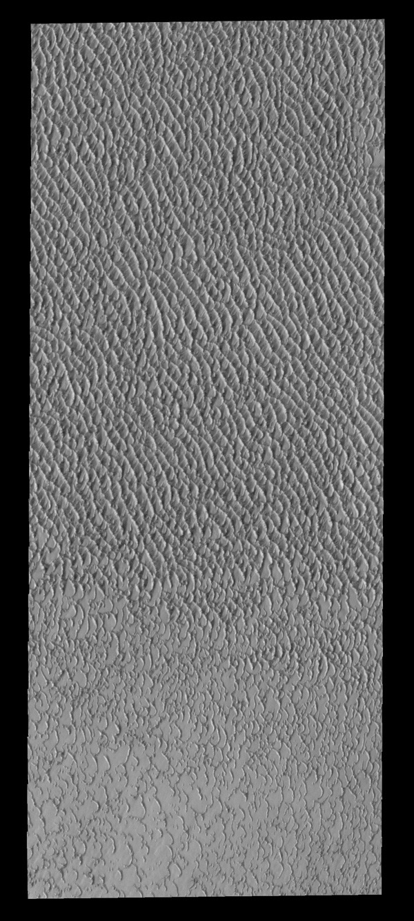 This image from NASA's 2001 Mars Odyssey spacecraft shows a small portion of Olympia Undae, the vast dune field near the north pole.