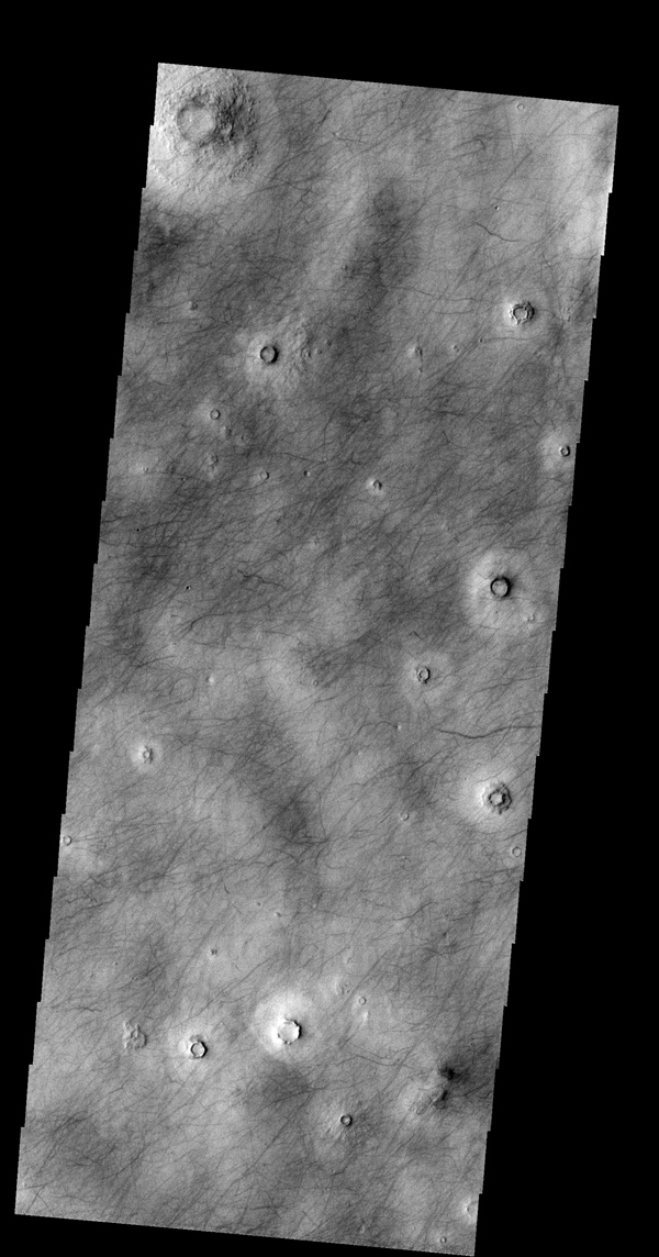 The dark markings in this image from NASA's 2001 Mars Odyssey spacecraft are tracks made by the passage of 'dust devils.' Dust devils are common in the extensive plains of the northern latitudes. This image is located in Utopia Planitia.