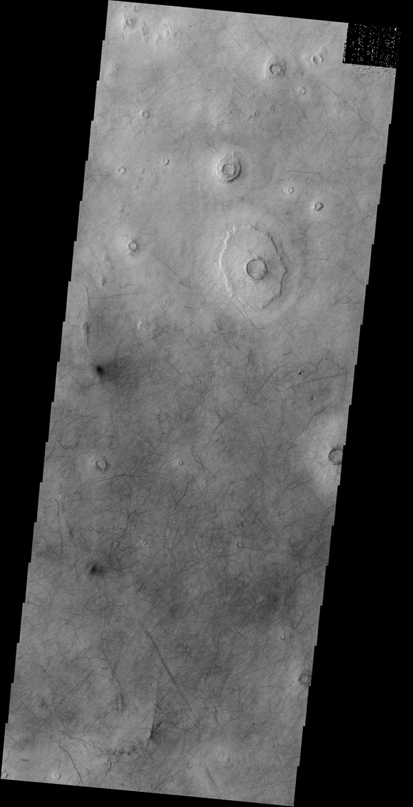 A multitude of dust devil tracks mark the suface in this region of Utopia Planitia. This image is from NASA's 2001 Mars Odyssey spacecraft.