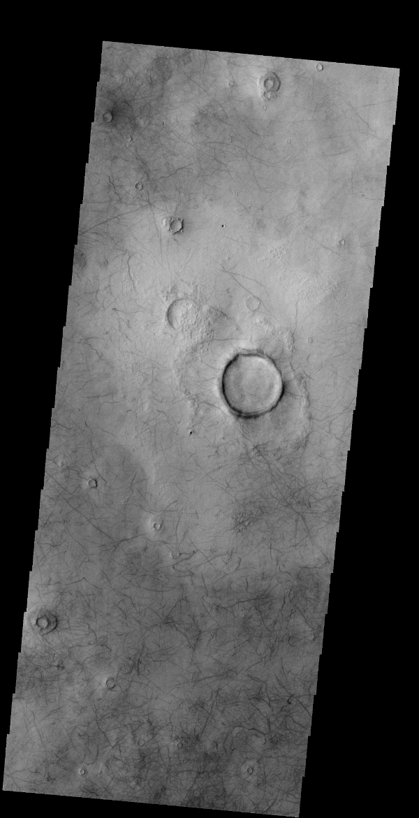 The numerous dust devil tracks in this image captured by NASA's 2001 Mars Odyssey spacecraft are located in Utopia Planitia.