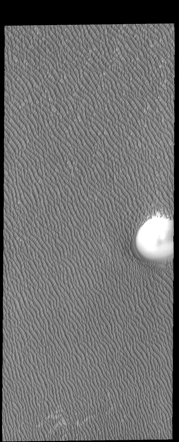 Dunes cover all but the highest hill of this image captured by NASA's 2001 Mars Odyssey spacecraft. These dunes are part of Olympia Undae, a huge dune field located near the north pole.