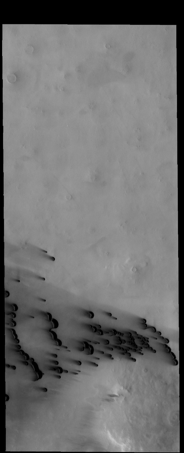 The small, dark dunes in this image captured by NASA's 2001 Mars Odyssey spacecraft are located on the northern plains.