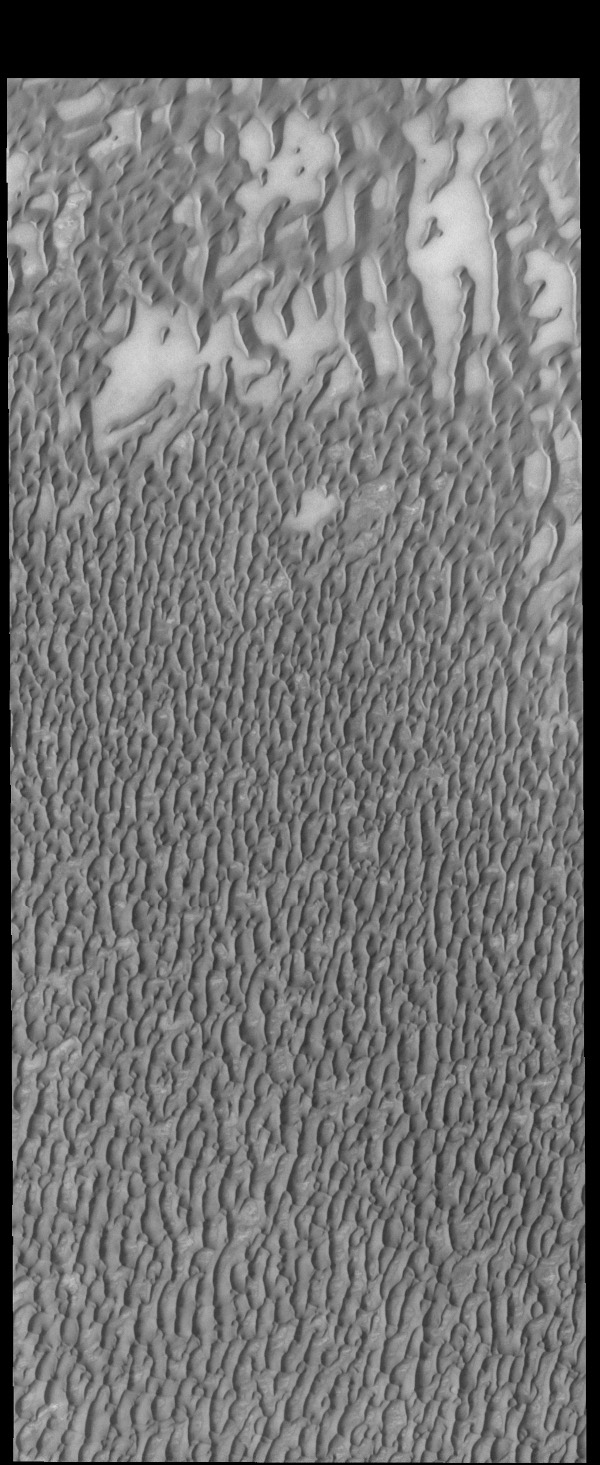 This image captured by NASA's 2001 Mars Odyssey spacecraft shows more of Olympia Undae, a large dune field located near the north polar cap.