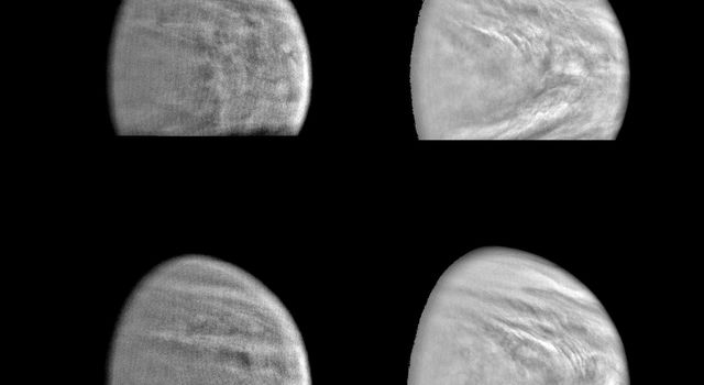 These images of the Venus clouds were taken by NASA's Galileo Solid State Imaging System February 13,1990, at a range of about 1 million miles. The smallest detail visible is about 20 miles. They show the state of the clouds near the top of Venus's cloud