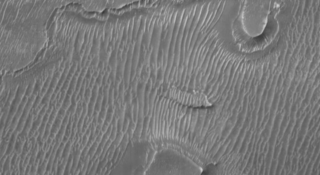 NASA's Mars Global Surveyor shows a portion of the floor of Melas Chasma. Dark sand dunes dominate the floor of this portion of the Valles Marineris canyon system. Smaller ripples are also visible in the troughs.