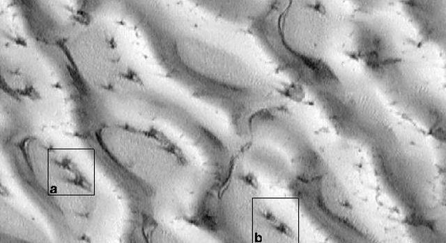 NASA's Mars Global Surveyor shows a small portion of the giant dune field that surrounds Mars' north polar region, as it appeared on August 23, 1998.