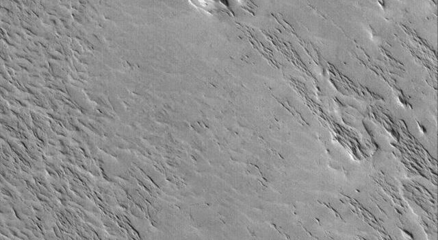 NASA's Mars Global Surveyor shows a wind-eroded terrain. The ridges that cut across the scene are classic yardangs, a landform created by wind erosion. These are located in the Eumenides Dorsum region of Mars.