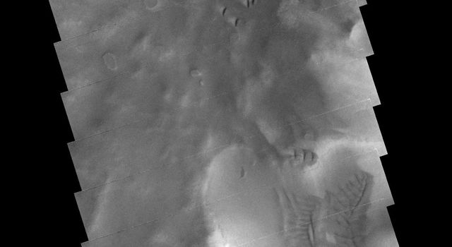The dunes and sand deposits in this image captured by NASA's 2001 Mars Odyssey spacecraft are located on the floor of Darwin Crater on Mars.