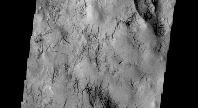 These dust devil tracks are located in the region surrounding Hooke Crater on Mars as seen by NASA's 2001 Mars Odyssey spacecraft.