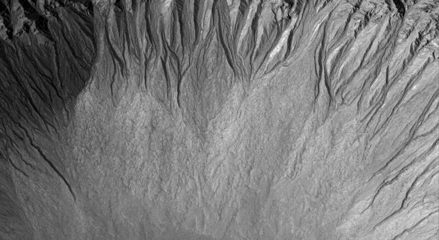 NASA's Mars Global Surveyor image shows a suite of south mid-latitude gullies on a crater wall. Gullies such as these may have formed by runoff of liquid water.