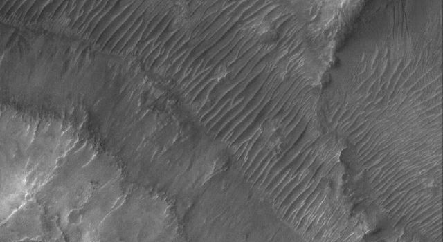 This image from NASA's Mars Global Surveyor shows the floor and walls of a small portion of Nirgal Vallis on Mars. The floor is covered by large windblown ripples.