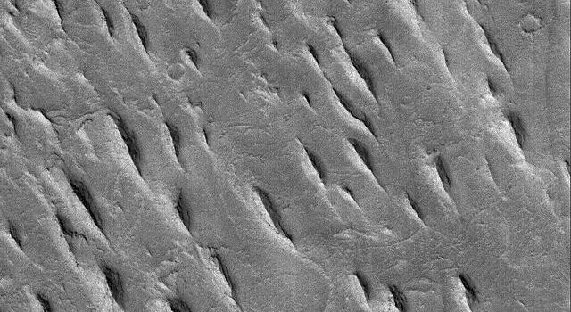 This image from NASA's Mars Global Surveyor shows a group of tapered ridges, known as yardangs, which formed by wind erosion of a relatively easily-eroded material, most likely sedimentary rock or volcanic ash deposits.