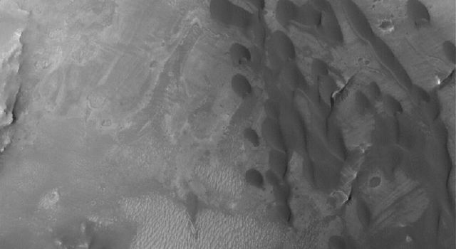 NASA's Mars Global Surveyor shows a field of low-albedo (dark) barchan sand dunes in a crater located in western Arabia Terra on Mars. Small dunes like these are common in the craters of western Arabia Terra.