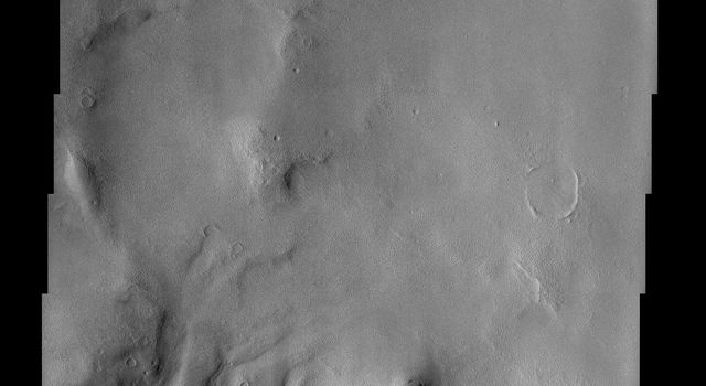 The larger craters in this image from NASA's Mars Odyssey spacecraft showing a region north of Elysium Mons are buried and distorted almost beyond recognition.