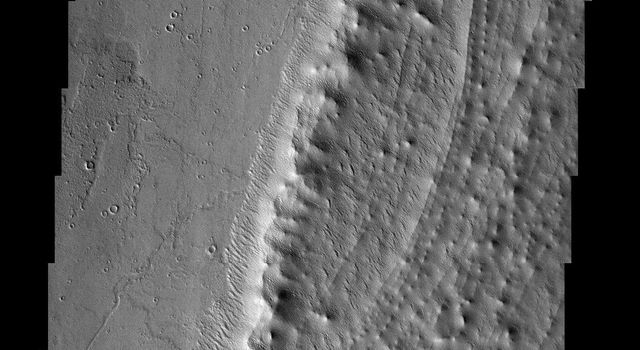 NASA's Mars Global Surveyor shows displays an aureole deposit at the base of the massive volcano Pavonis Mons' western flank on Mars.