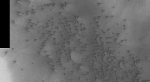 This image, part of an images as art series from NASA's 2001 Mars Odyssey released on Feb 17, 2004 shows the martian suface strongly resembling a flock of birds flying to the west.