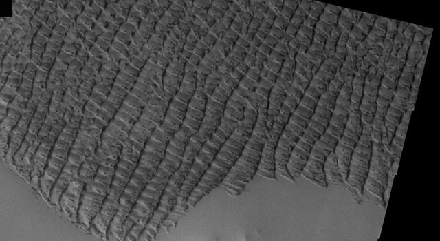 This image, part of an images as art series from NASA's 2001 Mars Odyssey released on March 1, 2004 shows squiggly lines of sand dunes on Mars.