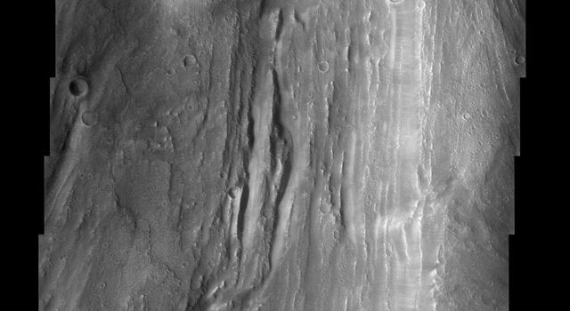This image, part of an images as art series from NASA's 2001 Mars Odyssey released on March 4, 2004 shows a martian landscape with markings bearing a striking resemblance to tree bark.