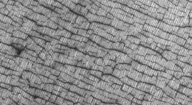 NASA's Mars Global Surveyor shows an odd area of Mars' south polar region that has sets of fine, nearly parallel lines and a darker, wider set of cracks enhanced by seasonal frost.