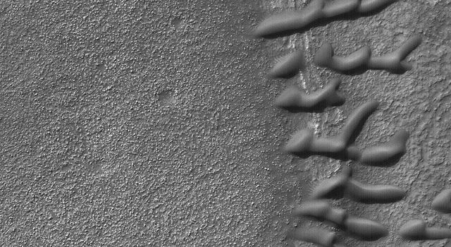 NASA's Mars Global Surveyor shows a group of small, dark sand dunes trapped along an arcuate ridge. The ridge probably marks the location of a partially-buried, eroded, and filled meteor crater.