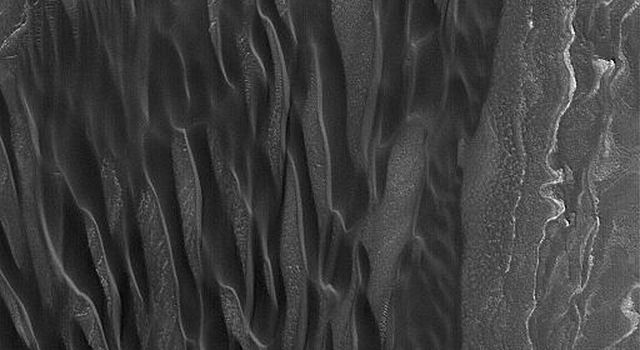 NASA's Mars Global Surveyor shows a grouping of elongated, dark (low albedo) sand dunes in the north polar region of Mars. This picture was acquired during early summer in October 2004.