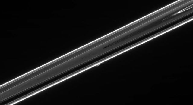 The dim, unlit side of Saturn's rings hides a secret in this view. Shy Mimas can be seen peeking out from behind the rings below center in this image taken by NASA's Cassini spacecraft.