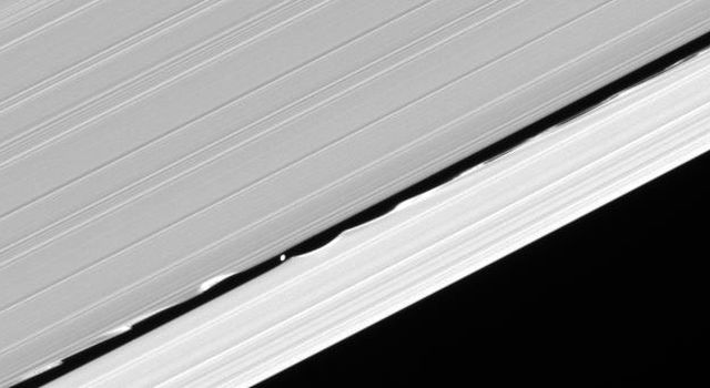 Daphnis drifts through the Keeler gap, at the center of its entourage of waves as seen by NASA's Cassini spacecraft.