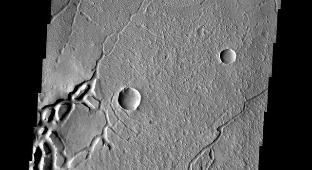 These curved fractures on Mars are located on the margin between Memnonia Fossae and Elysium Planitia as seen by NASA's 2001 Mars Odyssey.