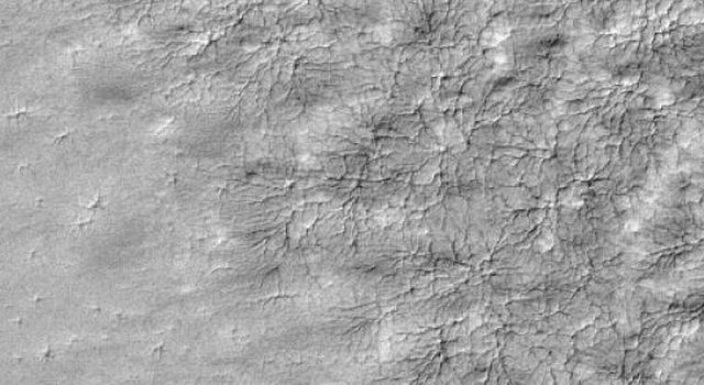 This image from NASA's Mars Global Surveyor shows a delicate pattern, like that of a spider web, appears on top of the Mars residual polar cap, after the seasonal carbon-dioxide ice slab has disappeared.