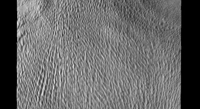 This large dune field is located in a trough of the north polar ice cap on Mars as seen by NASA's Mars Odyssey spacecraft.