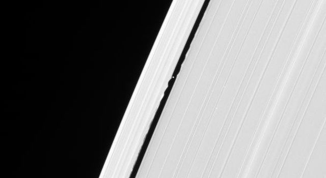 Daphnis cruises through the Keeler Gap, raising edge waves in the ring material as it passes. This image is from NASA's Cassini spacecraft.