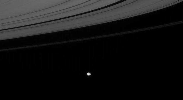 NASA's Cassini spacecraft gazes down toward Saturn's unilluminated ringplane to find Janus hugging the outer edge of rings.