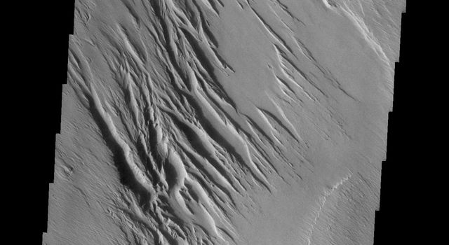 This image from NASA's Mars Odyssey spacecraft shows a very small portion of the Medusa Fossae Formation on Mars, an extensive deposit of poorly cemented materials that is heavily wind eroded.