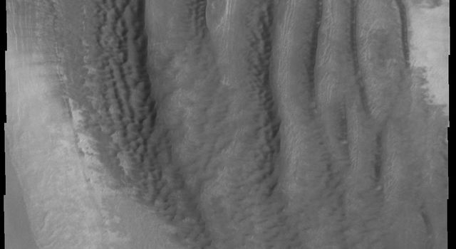 This image from NASA's Mars Odyssey shows interesting dune forms on Mars located on the margin of remnant polar deposits on the floor of Reynolds Crater.