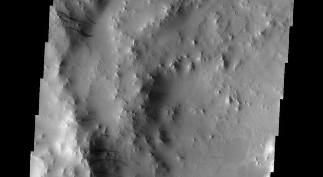 This image from NASA's Mars Odyssey shows the western rim of a crater on Mars containing multiple groups of dark slope streaks. These streaks are created when surface dust slides downward, revealing the darker material beneath.