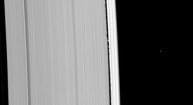 Saturn's moon, Daphnis, leaves a path of disturbance on either side of her as she moves in her orbit within the Keeler Gap in this image from NASA's Cassini spacecraft taken on Jan. 31, 2009.