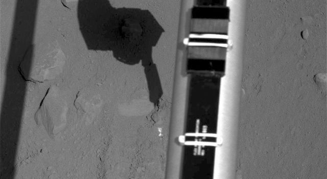 The Surface Stereo Imager on NASA's Phoenix Mars Lander recorded this image of the lander's Robotic Arm enlarging and combining the two trenches informally named 'Dodo' (left) and 'Goldilocks.'