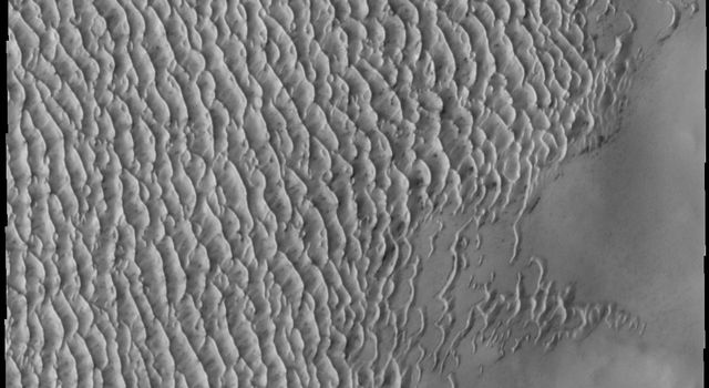This image from NASA's Mars Odyssey shows the margin of Mars' north polar erg - an extensive field of dunes that encircles the pole.