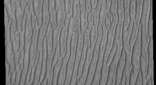 Linear duneforms are found on the sand dune sheet on the floor of Richardson Crater on Mars as seen by NASA's Mars Odyssey spacecraft.